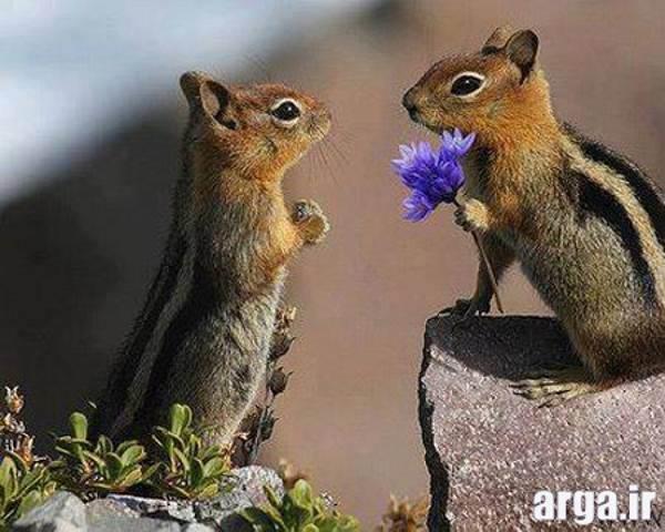 خنده دار ترین هدیه گل به دوست