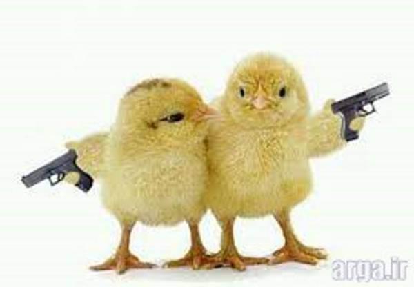 تفنگ های این موجودات خنده دار