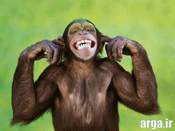 میمون خنده دار
