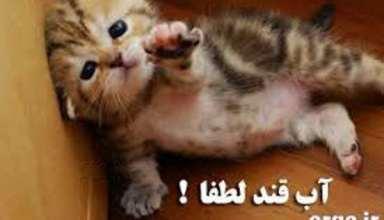 گربه عکس های خنده دار مرداد 94