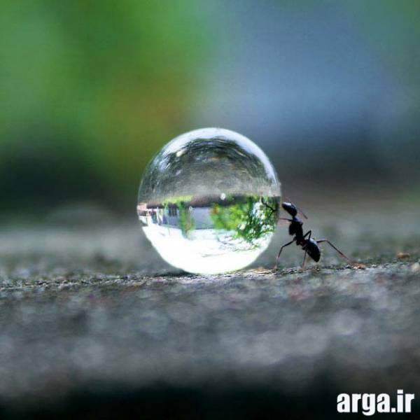 نمایی نزدیک از مورچه در عکس های دیدنی