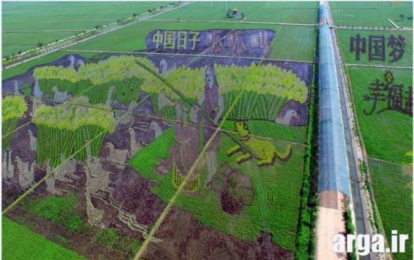 شالیزارهای طرح دار چین در عکس های دیدنی 94