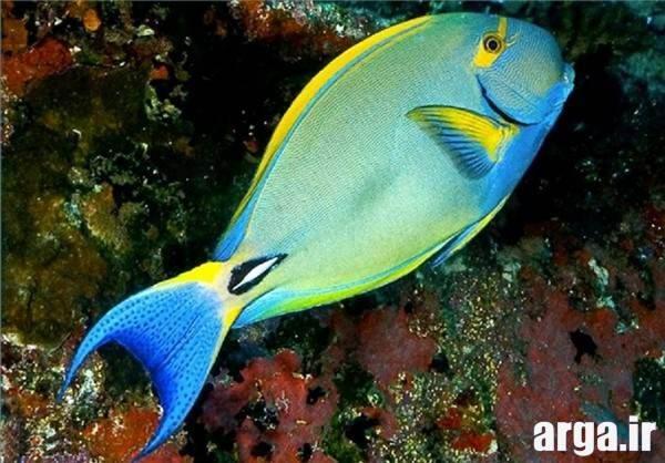 ماهی آبی در عکس های مرداد 94