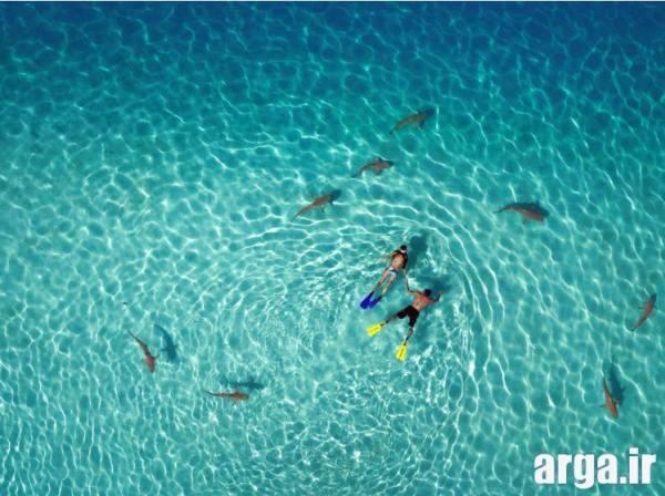 شنایی دیگر با کوسه ها در عکس ها