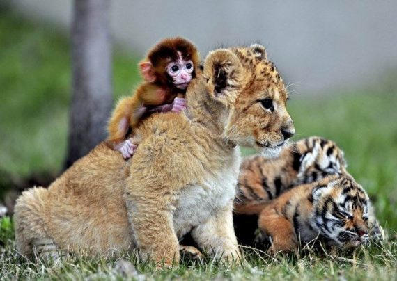 دانستنی های شگفت انگیز حیوانات