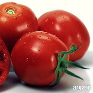 گوجه فرنگی و طرز تهیه پیتزا مارگاریتا