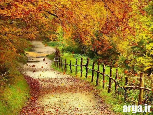یک جاده رویایی در تصاویر طبیعت