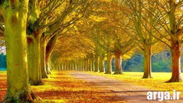 تصاویر طبیعت پاییز