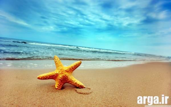 ستاره دریایی زاده طبیعت