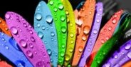 Personality test based on color (3)