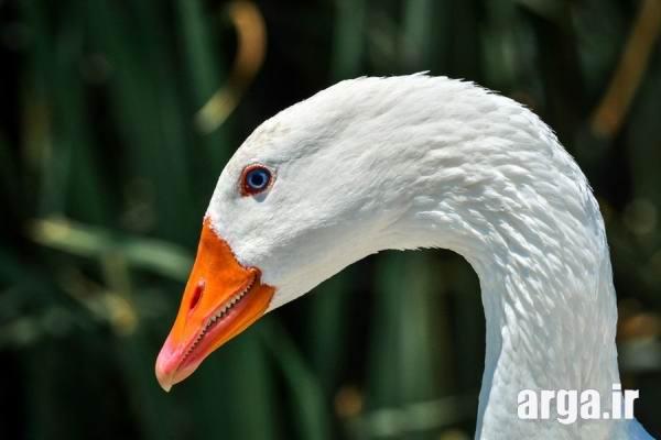 چهره پرنده