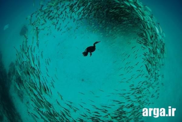 عکس زیر آب