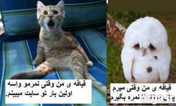 قیافه های جالب در عکس خنده دار