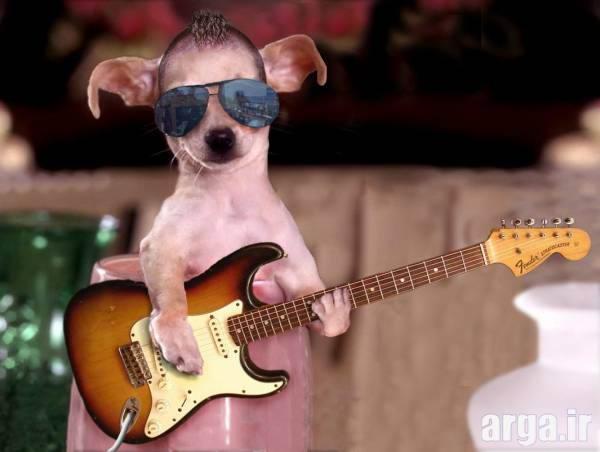 سگ موسیقیدان بامزه