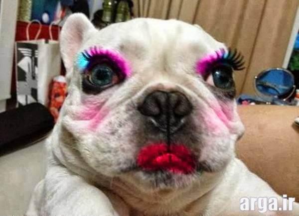 سگ آرایش شده در عکس های بامزه