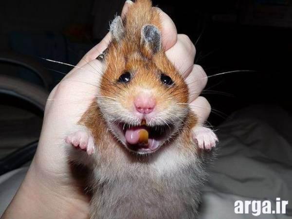 موش بیچاره در عکس