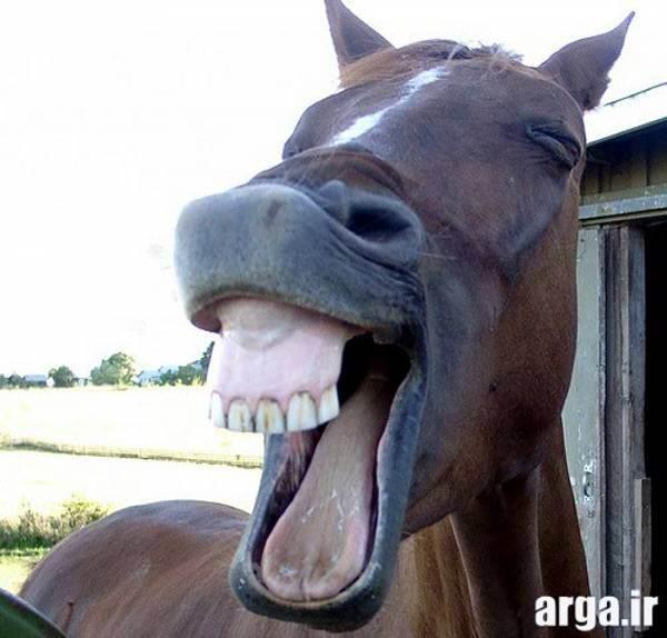 خنده اسب در عکس های بامزه