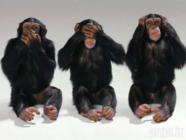 میمون های بازیگوش در عکس ها
