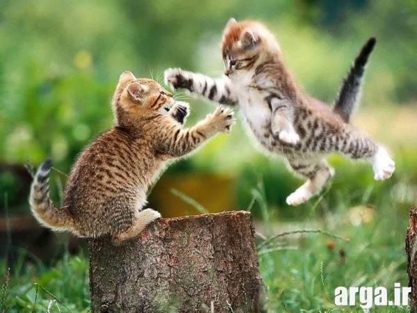 دعوای گربه ها در عکس های بامزه از حیوانات