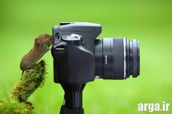 سنجاب عکاس بامزه