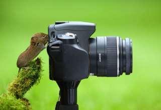 عکس های بامزه از حیوانات