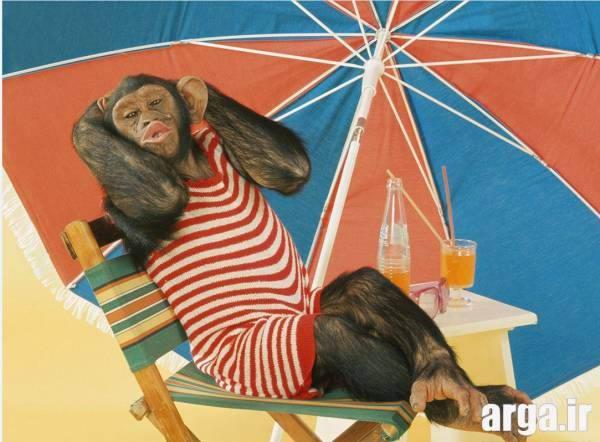 میمون خوش گذران بامزه