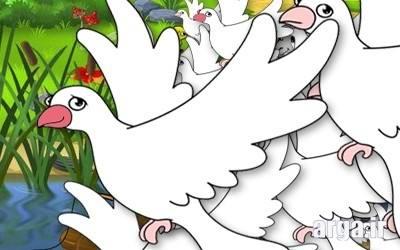 اتحاد کبوترها