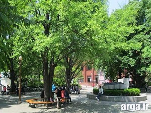 پارک مارونیر 2 در عکس های سئول