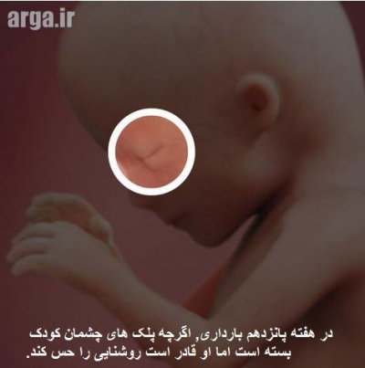 روند رشد جنین پانزده هفته