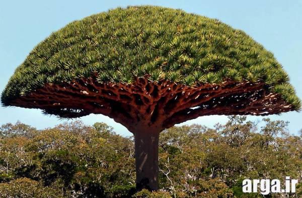 درختان عجیب در طبیعت 1