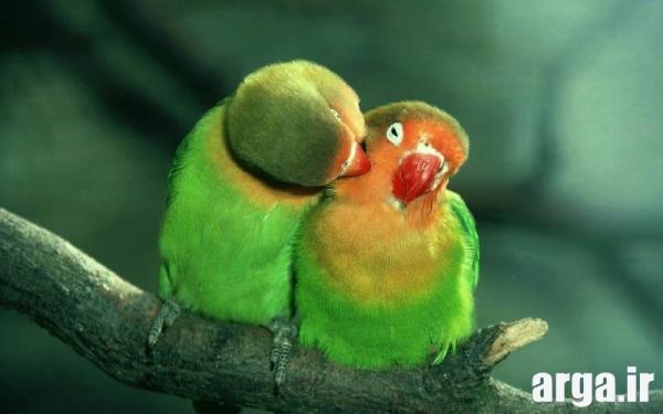 عکس ناب عاشقانه زیبا