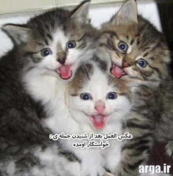 گربه های خنده دار و جالب