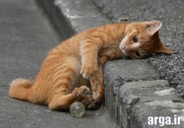 گربه دمق و خنده دار