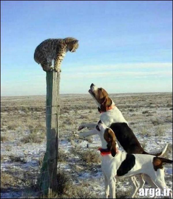 سگ و گربه های خنده دار