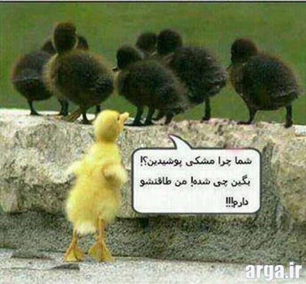 جوجه اردک های خنده دار و جالب