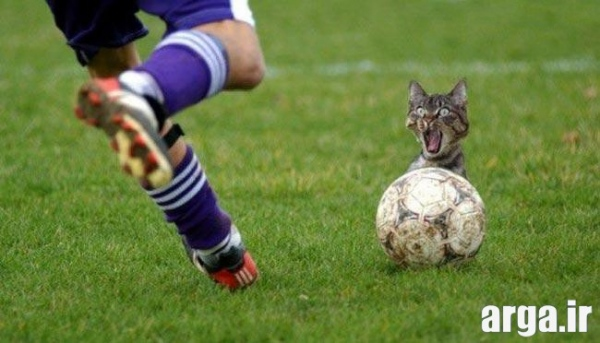 عکس خنده دار و جالب جذاب