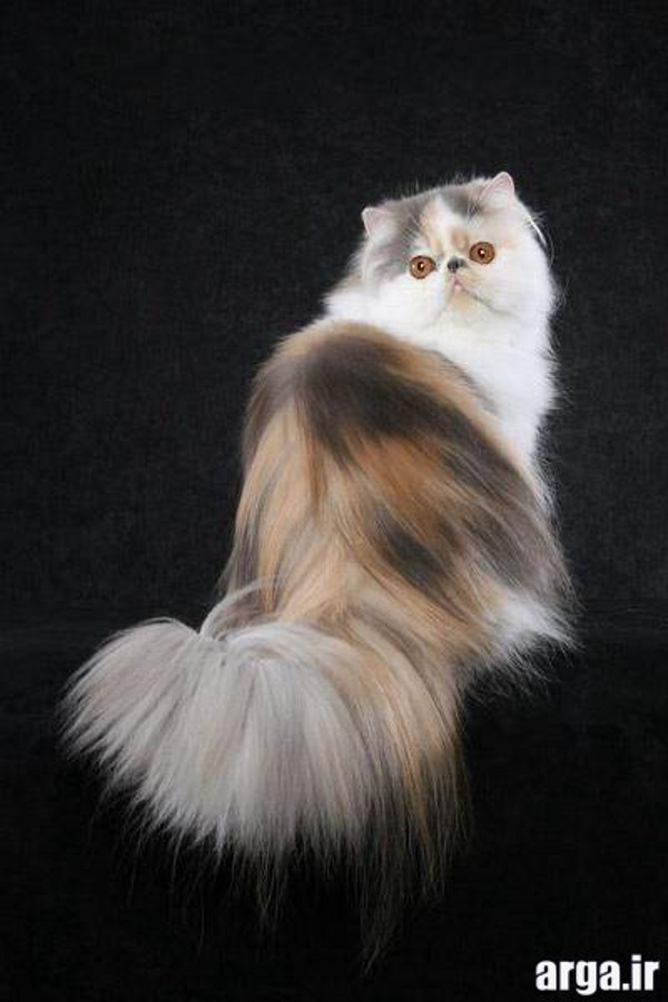 گربه های شیرین