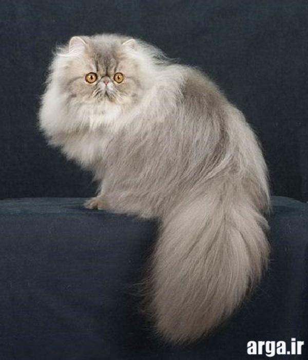 تصاویر گربه های ناز