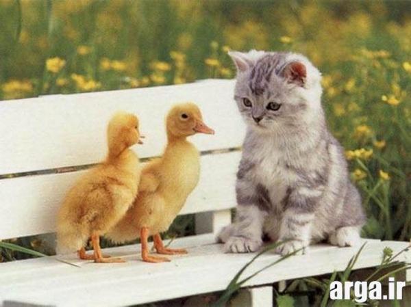 تصاویر گربه های جدید