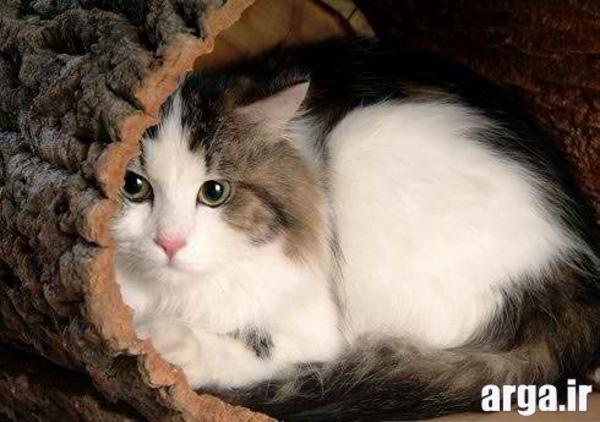 تصاویر گربه های دوست داشتنی