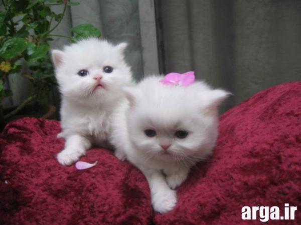 تصاویر گربه های شیرین