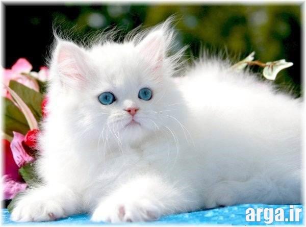 جدیدترین تصاویر گربه ها