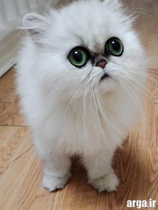 نازترین تصاویر گربه ها