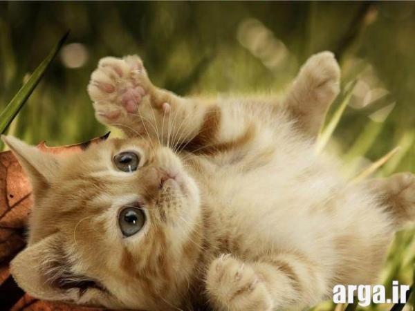 زیباترین تصاویر گربه ها