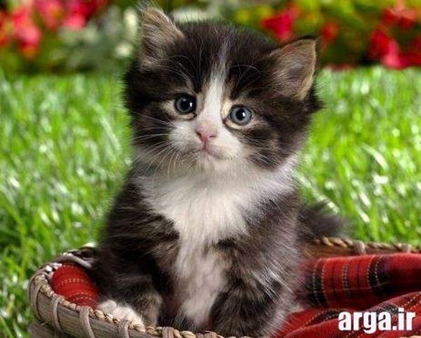 ملوس ترین تصاویر گربه ها