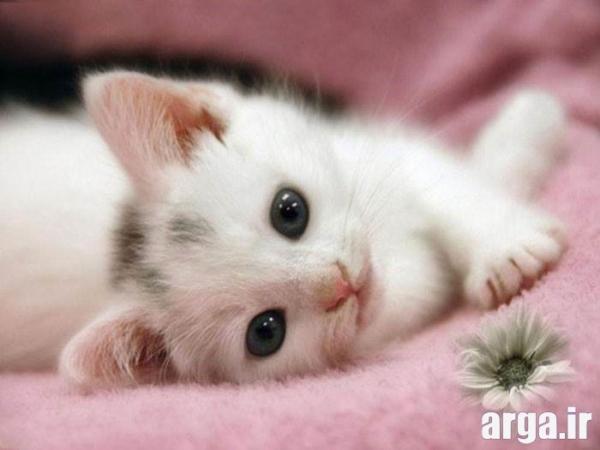 عکس گربه دوست داشتنی