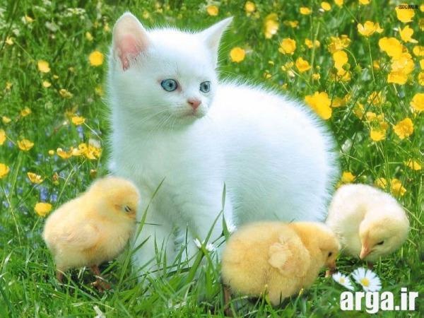 گربه های زیبا