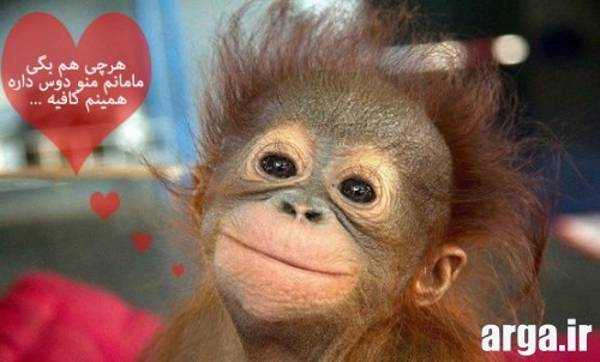 عکس طنز میمون