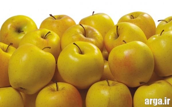کمپوت سیب در منزل