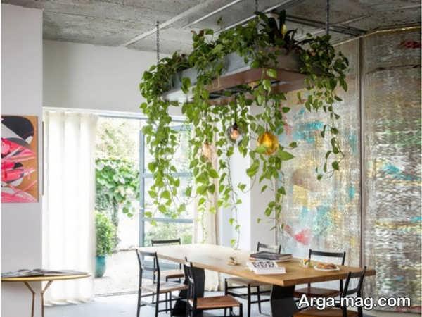 تزیین دوست داشتنی خانه با گل پتوس